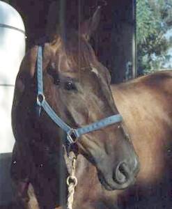 bob_horse