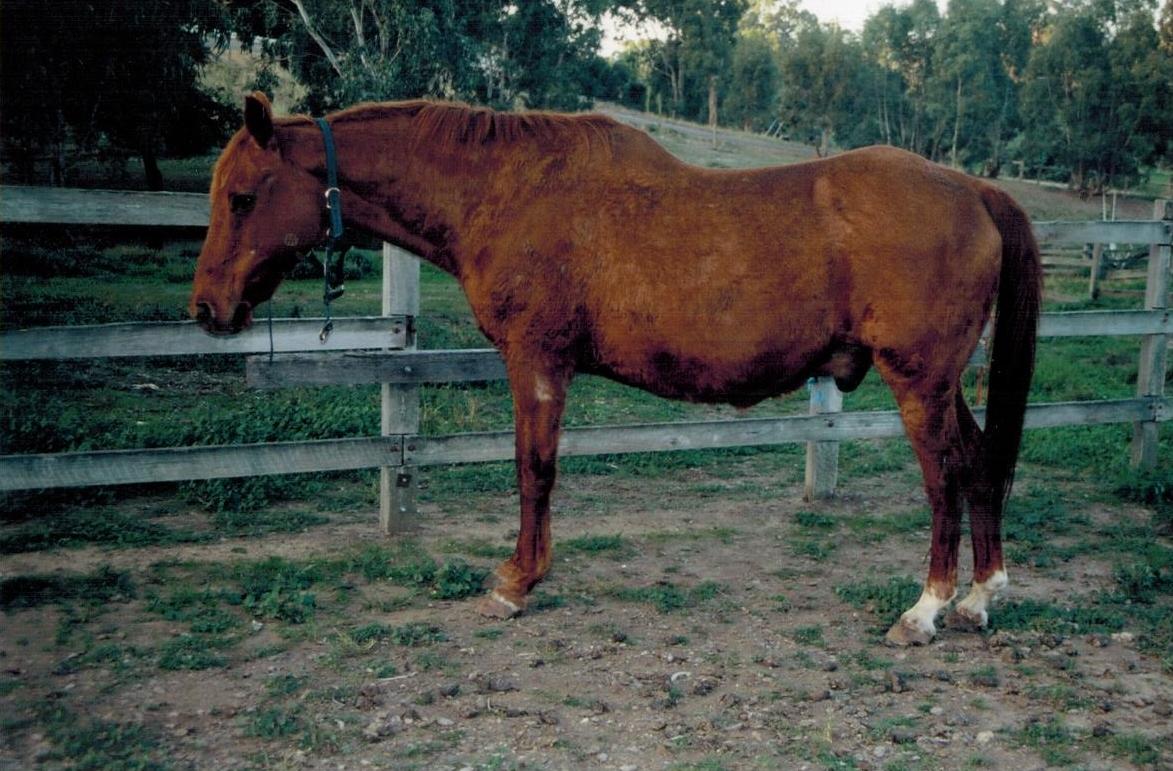 Farriervet Lancaster Canine Equine Feline